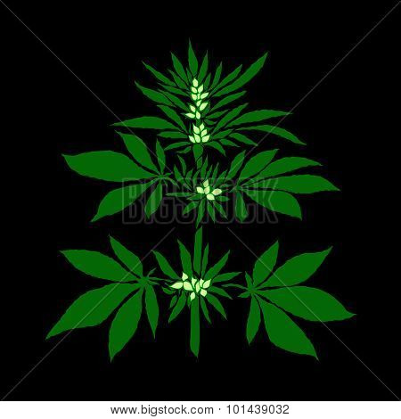 Marijuana Leaf In Abstract Style, Plant With Buds