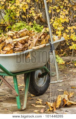 Cleaning The Fallen Leaves In The Garden
