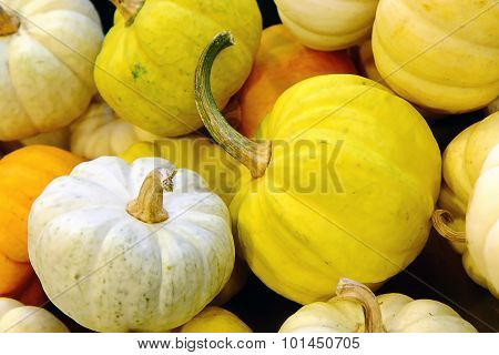 Small Pumkin, White And Yellow Pumkin