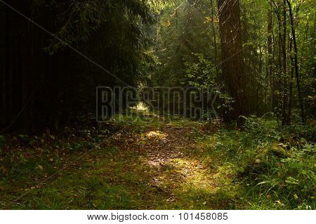 Sunlight On The Forest Path In The Autumn Fallen Leaves