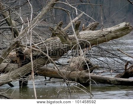 Trees fell into the water in early spring