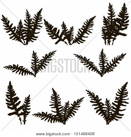 Set of ink drawing fern leaves