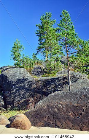 Karelian Landscape: Pines On The Rocks. Russia