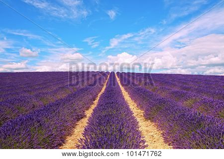 Lavender Flowers Blooming Field And Cloudy Sky. Valensole, Provence, France