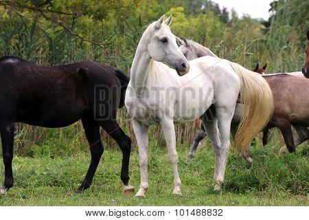 Beautiful Gray Mare Standing On Pasture Rural Scene