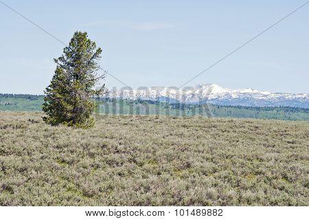 Spring Rocky Mountains