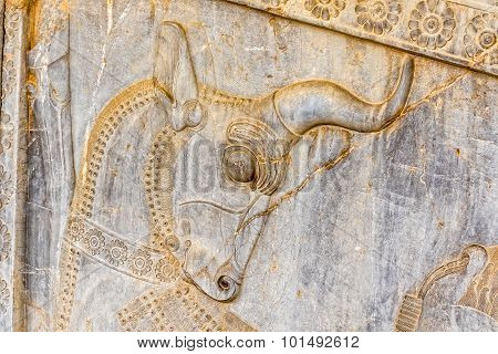 Bull relief detail Persepolis