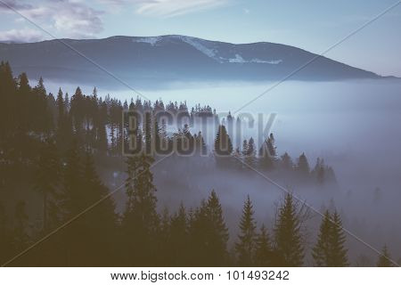 Morning fog in the mountains. Winter landscape with fir forest on mountain slopes. Color toning. Low contrast