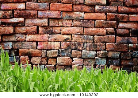 Green Grass And Old Brick wall
