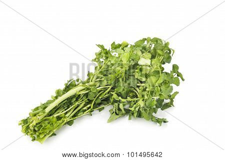 Bundle Of Freshly Harvested Watercress Rich In Vitamin And Nitrate.