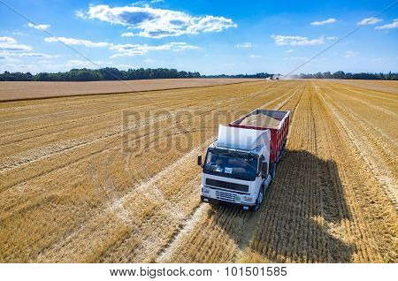 The Truck Filled With Wheat Seeds