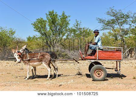 Donkey Cart - Namibia