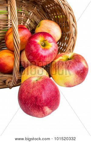 Ripe red Apples rolling out of basket on white background
