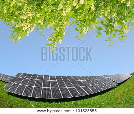 Solar energy panels with blooming branch tree. Clean energy.