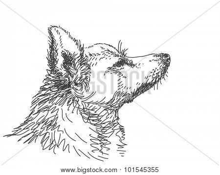 Sketch of dog muzzle in profile, Hand drawn vector illustration