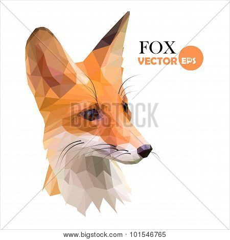 Red foxes low polygon style.