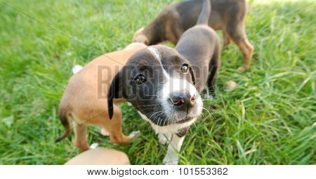 Cute Puppies. Pet And Animal Theme