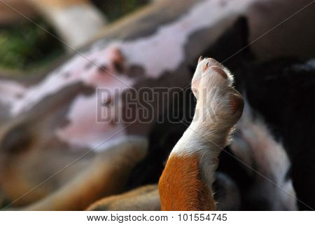 picture of  a cute Puppy paw. Animal and pet theme,