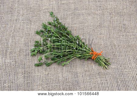 Satureja Tied Savory Medical Spice Herb With Orange String On Linen