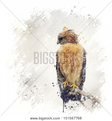 Digital Painting Of Red Shouldered Hawk