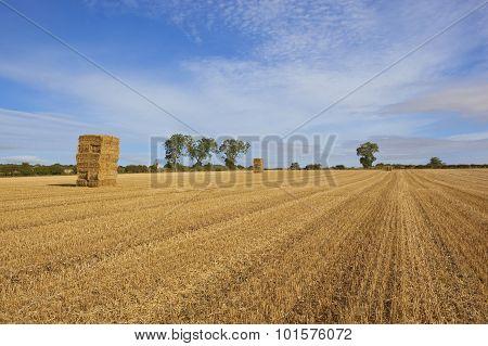 Golden Straw Stacks