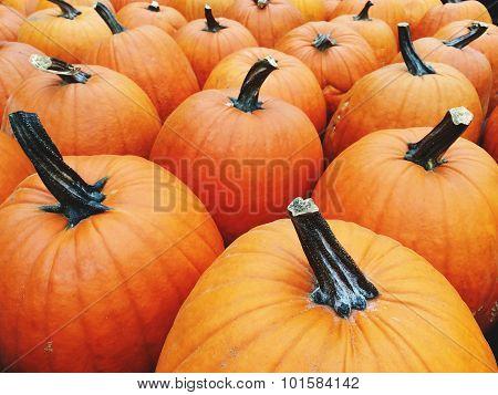 Big Bright Orange Pumpkins