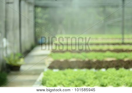Blur Hydroponic Vegetable Garden Abstract Background.