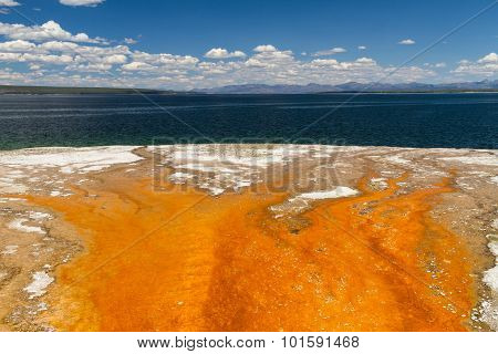 Bacteria Mat At Yellowstone Lake