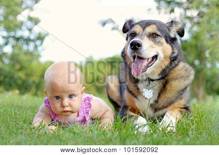 Baby Girl Laying Outside With Pet German Shepherd Dog