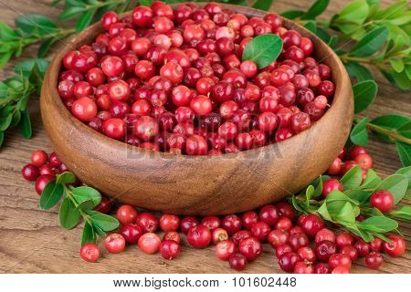 Cowberry Lingonberry in wooden bowl closeup