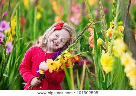 Child Picking Fresh Gladiolus Flowers