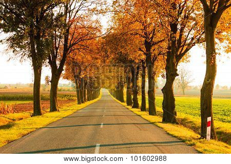 Road Running Through Tree Alley. Autumn