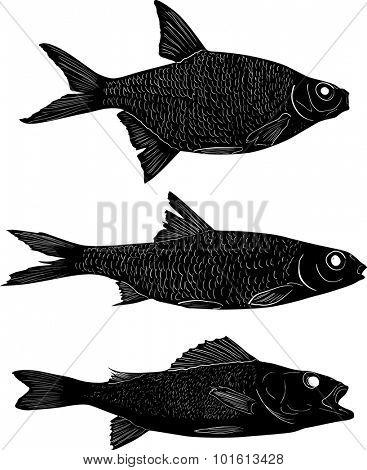 illustration with set of three freshwater fishes isolated on white background