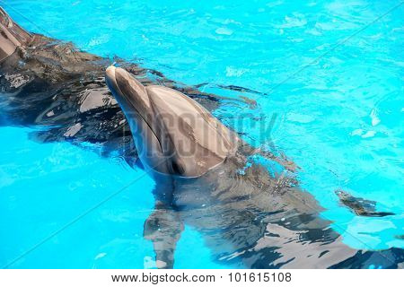 Cute dolphins in the dolphinarium