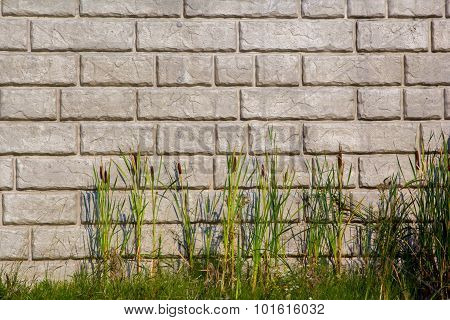 Cat Tails in front of brick patterned retaining wall