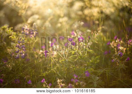 Wildflowers In Summer