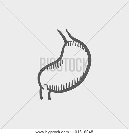 Stomach sketch icon for web, mobile and infographics. Hand drawn vector dark grey icon isolated on light grey background.
