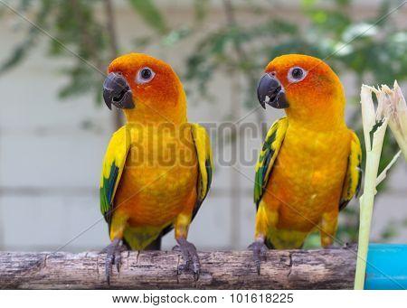 Parrots Court