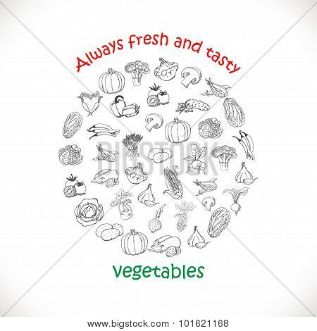 Isolated vegetables in a circle. Vector illustrations