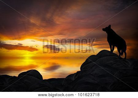 Wolf Howling In The Sunset