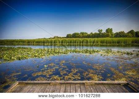 Wetland landscape on Point Pelee conservation area in Ontario, Canada