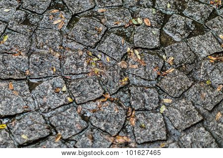 Fallen Leaves On Wet Cobblestone Paving