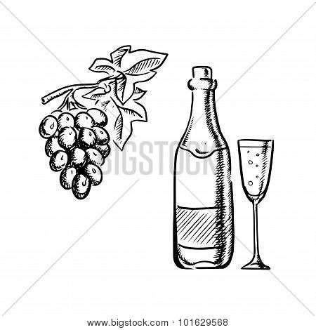 Wine bottle, glass and grapes sketch