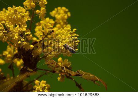 bee and yellow bush