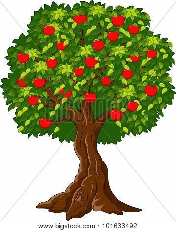 Green Apple tree full of red apples isolated