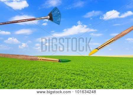 Paintbrushes On Green Lucerne Field Under Blue Sky