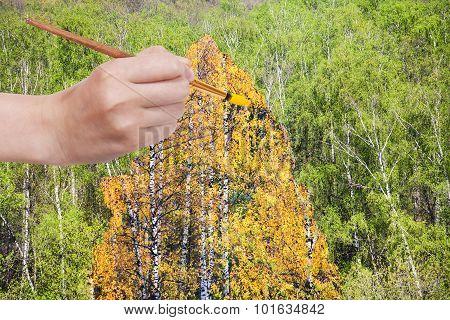 Brush Paints Yellow Autumn Birch In Green Grove