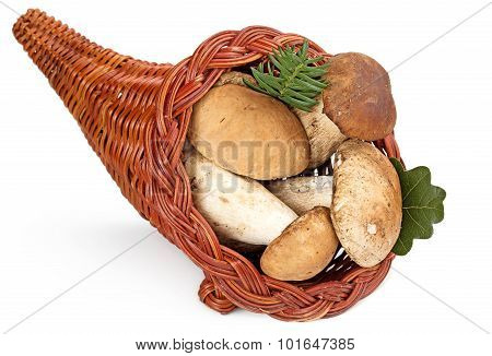 cornucopia filled with ceps