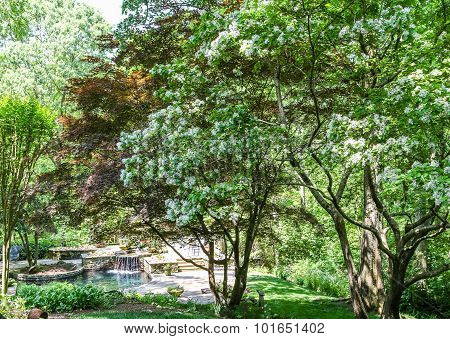 Beautiful Trees Around A Landscaped Pond