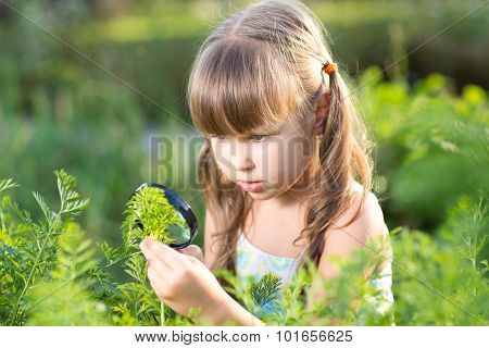 Child girl looking at halm leaves through magnifier outdoors